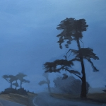 Santa Cruz cypress in fog